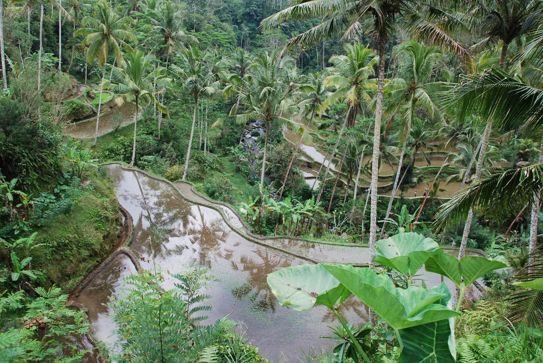 Bali 064