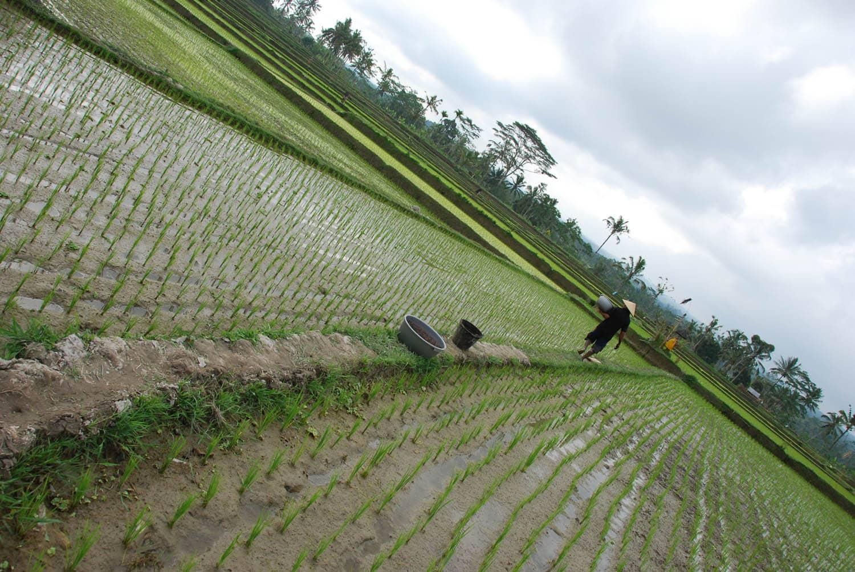 Bali 092