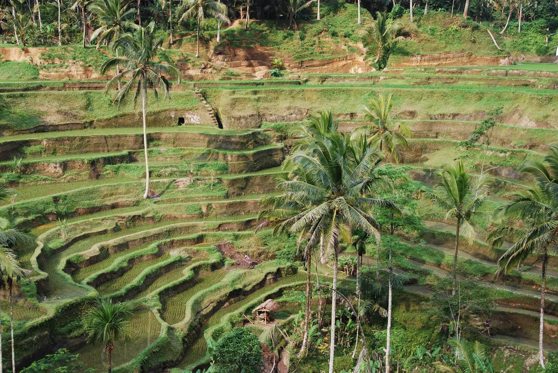Bali 110
