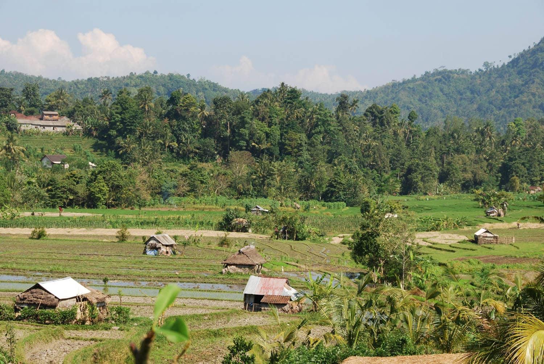 Bali 225