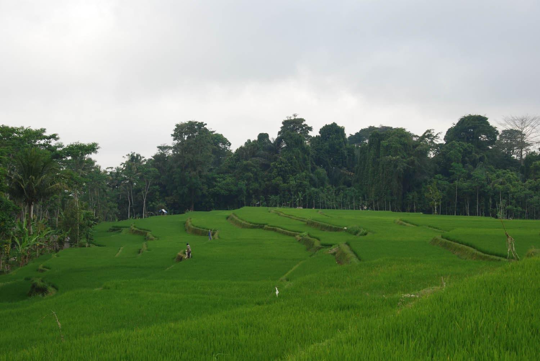 Bali 261
