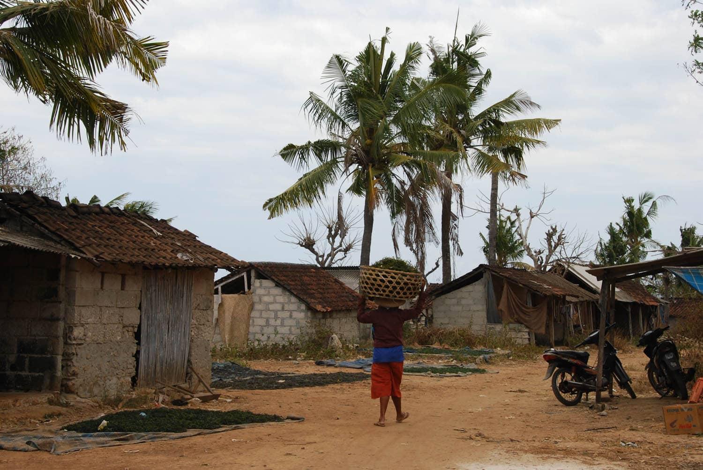 Bali 418